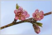 Blüten im Frost